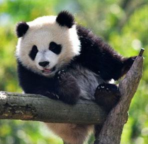湘潭市博物馆电子票务系统