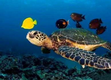 怀化鸥兴海洋世界